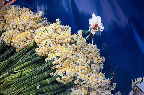 جشنواره گل نرگس