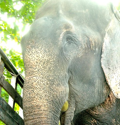 فیلی که با اشک شوق خود همه را متاثر کرد