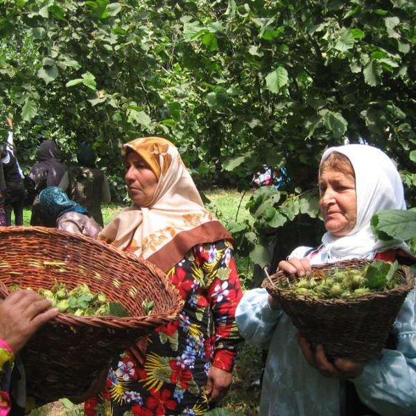 اين جشن همان جشن تيرگان ايران باستان است، که در روز سيزدهم تيرماه برگزار مي شود