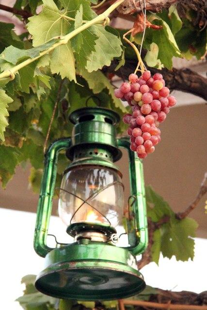 یکی از مراسم بسیار جالب در آذربایجان جشن انگور میباشد. قدمت این جشن که به چند هزار قبل میرسد
