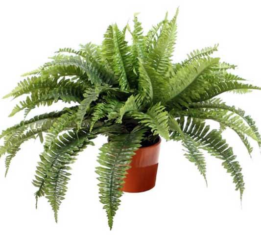 10 گیاه آپارتمانی که هوا را تصفیه می کنند